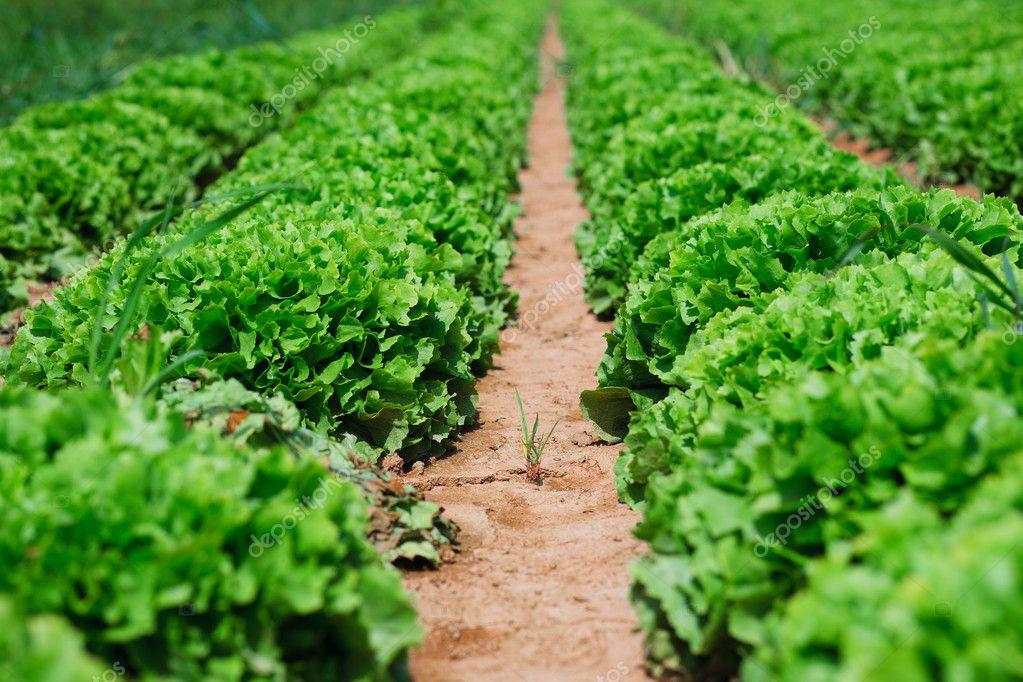 Alternatywne sposoby zwalczania szkodników warzyw