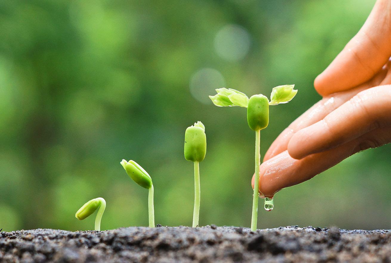 Zaopatrzenie roślin w wapń i bor w aspekcie deficytu wody w glebie