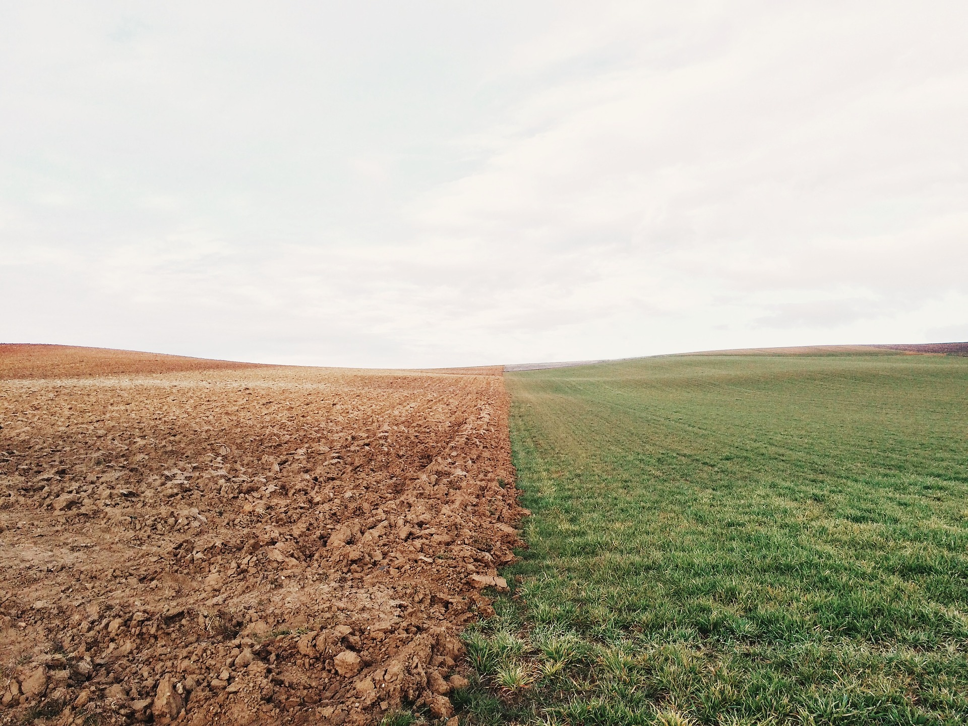 Fosfor – ważny makroelement