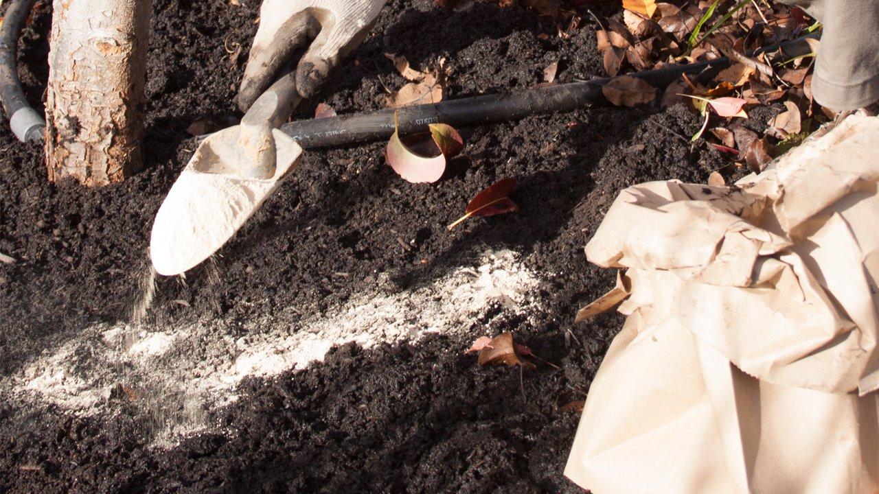 Wapń jako niezbędny pierwiastek do wzrostu i rozwoju warzyw