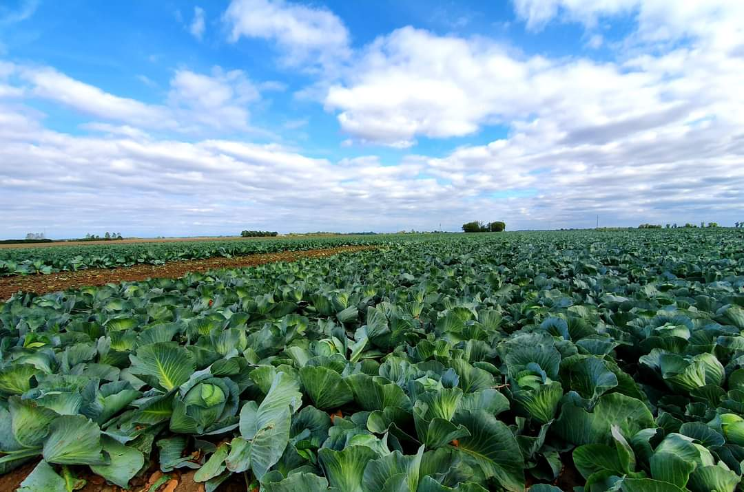 Ograniczenie chorób i szkodników w uprawach warzyw i roślin rolniczych