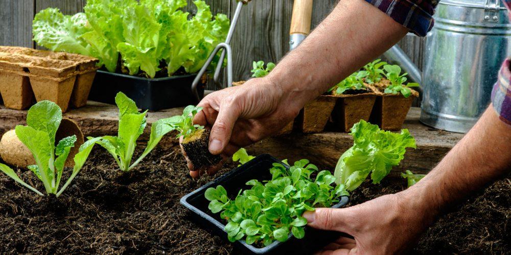 start-vegetable-garden